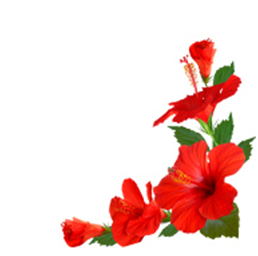"""Hibiscus Leaves or flowers"""
